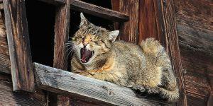 налог на котов и кошек