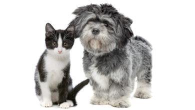 Photo of Отказ от домашних животных спасёт климат?