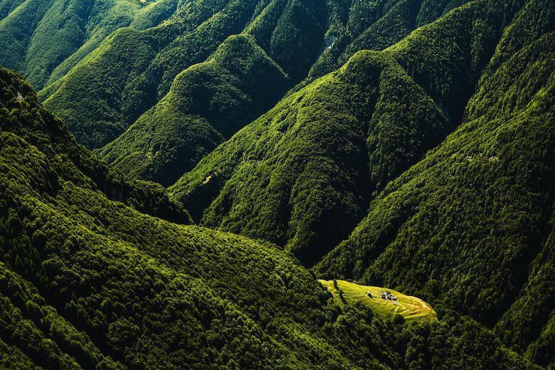 лес Онзерно